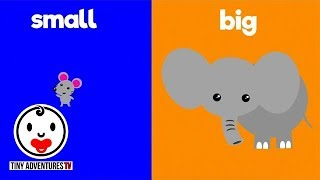 Learn Opposites | Big & Small | Simple learning video for babies, toddlers, kids