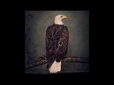 Clutch - Book Of Bad Decisions - 2018 Full album Mp3