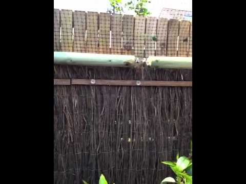 Tuin Afzetten Kat : Tuinafzetting katten youtube