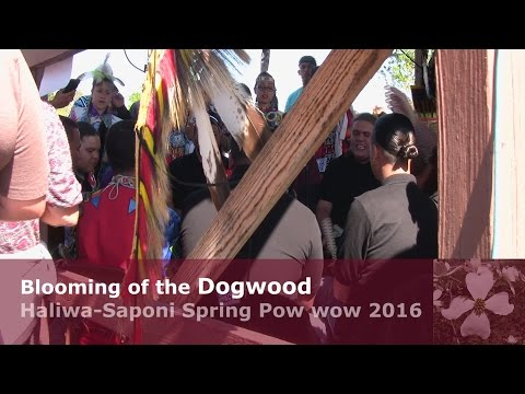 Blooming of the Dogwood 2016 Haliwa-Saponi Pow wow Scenes