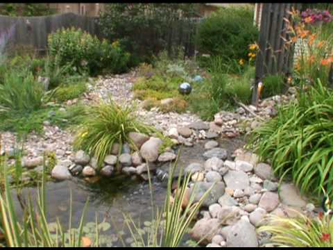 advice before putting a pond in your yard youtube