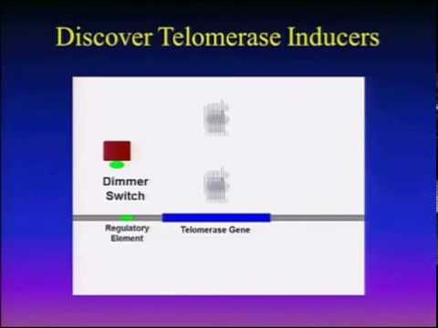 Sierra Sciences Telomerase Activation Mission