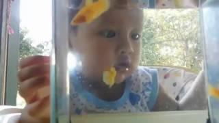 คุณเคยเลี้ยงปลากัดครั้งแรกตั้งแต่ตอนอายุกี่ขวบ