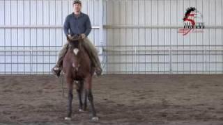 Beginner Horse Lessons:  sideWAYS vs side PASS