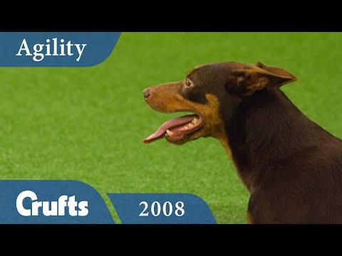 Agility - Championship Final 2008 | Crufts Dog Show