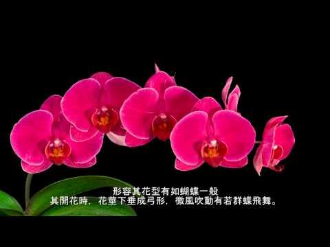 台灣蘭花-我們的驕傲