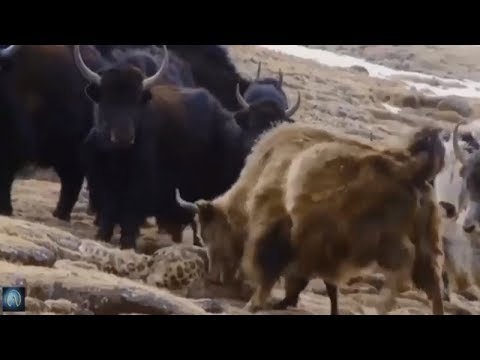 When Zoo Animals Attack Compilation Part 5