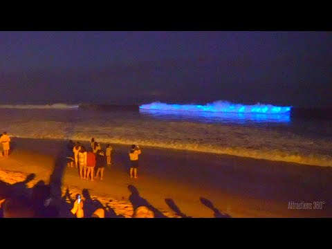 Bioluminescent Waves - Glowing Neon Blue Waves At SoCal Beaches - Avatar-like Waves