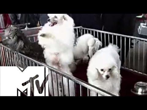 Animals Got Moves - Ridiculousness, Season 2 | MTV