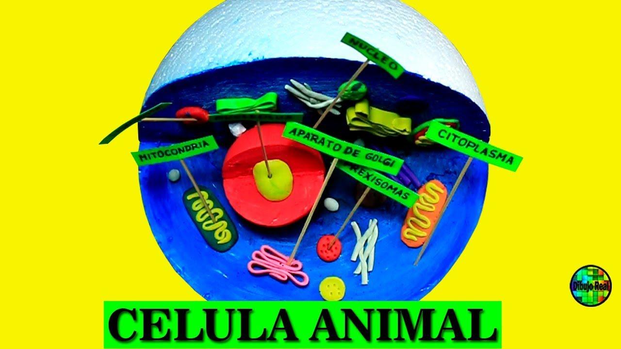 Como hacer una MAQUETA de CELULA ANIMAL paso a paso - YouTube