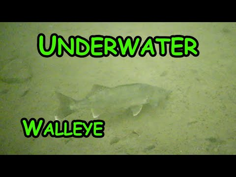 Ice Fishing Walleye With Underwater Camera! (Top 5 Lures)