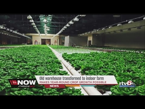 WATCH: Old warehouse transformed into new indoor farm