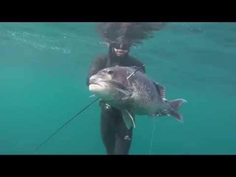 Spearfishing Southern KZN