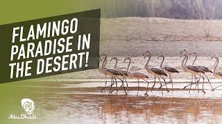 Beautiful nature at Al Wathba Wetland Reserve | CNN Travel
