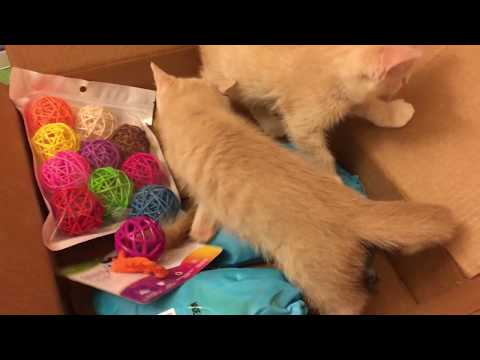Kittens Get a Colorful Toy Package!!