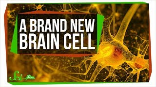 A Brand New Type of Brain Cell | SciShow News