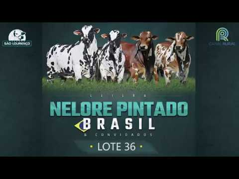 LOTE 36