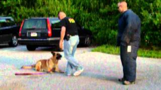 Bob Gets Owned By Chico The Derry Township K9 Unit