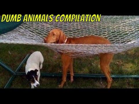 Dumb Animals Compilation