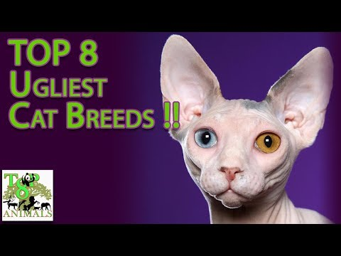 Top 8 Ugliest Cat Breeds !
