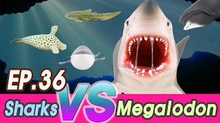 Repeat youtube video [EN] Megalodon is hunting sharks (Zebra, hammerhead, Saw, great white)  collecta [cocostoy]