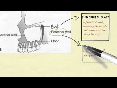 Anatomy of maxillary sinus - YouTube