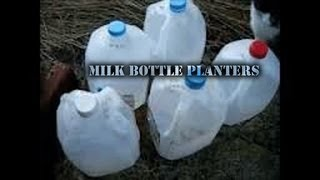 Milk Bottle Planters - Vegetable Planters Made Easy