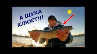 Москва река рыбалка на спиннинг 9 12 20 а РЫБА КЛЮЁТ