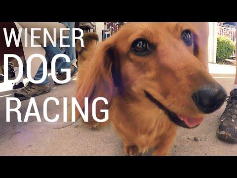 WIENER DOG RACING! The Dachshund Dash