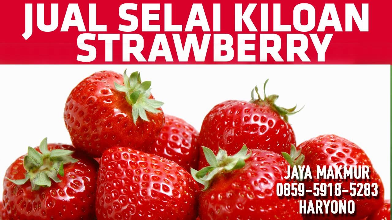 0859 5918 5283 Jual Selai Strawberry Kiloan Youtube