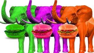 aprender animales salvajes hamburguesa colores para niños | Videos de elefante en color 3D para niño