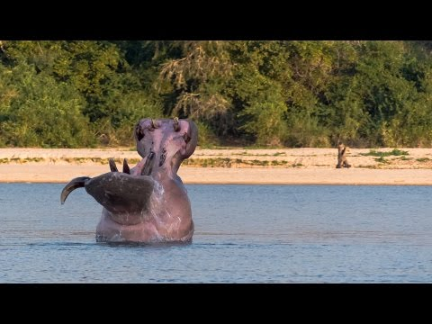 PD SAFARIS Tanzania 2014 Hunting Selous and Massailand