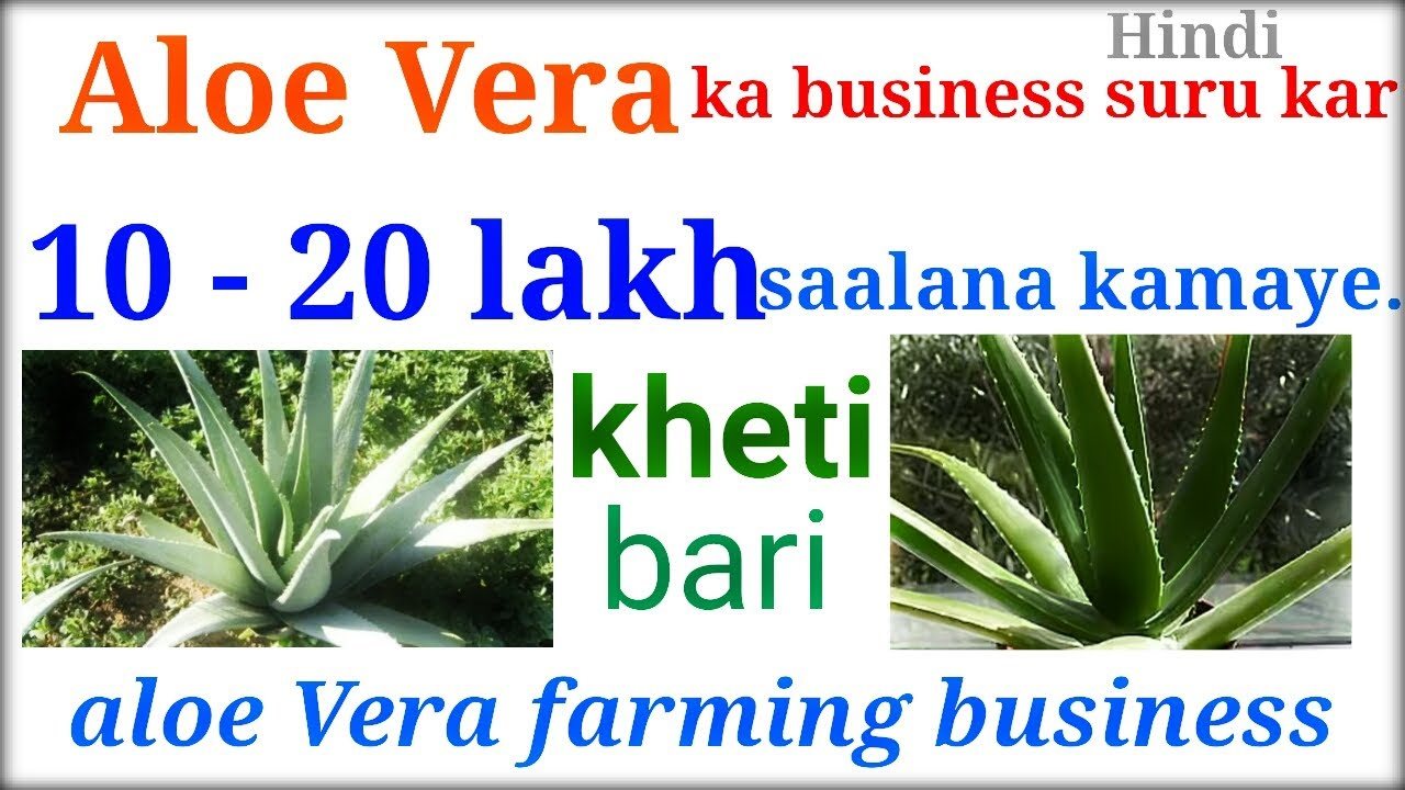Aloe vera business plan in india