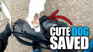 ANIMALS SAVED BY BIKERS | BIKERS ARE NICE [EP. 87]