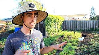 How I'm Shutting Down My Urban Farm