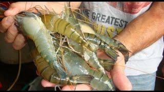 How Its Made | Farmed Shrimp