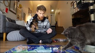 GAME DAY WITH MY CAT & DOG!
