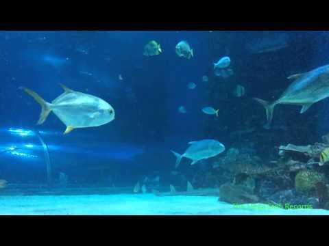 Tropicarium Budapest Zoo Aquarium, Tropicarium Budapest