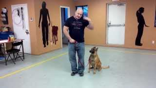 Dog Training Being Consistant With Foot Signals