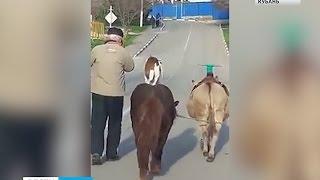 В Архипо-Осиповке туристов развлекает собака Бобик(Номер, который обычно показывают в цирке, можно увидеть на улицах Архипо-Осиповки. Собака Бобик проехала..., 2016-03-10T12:25:13.000Z)