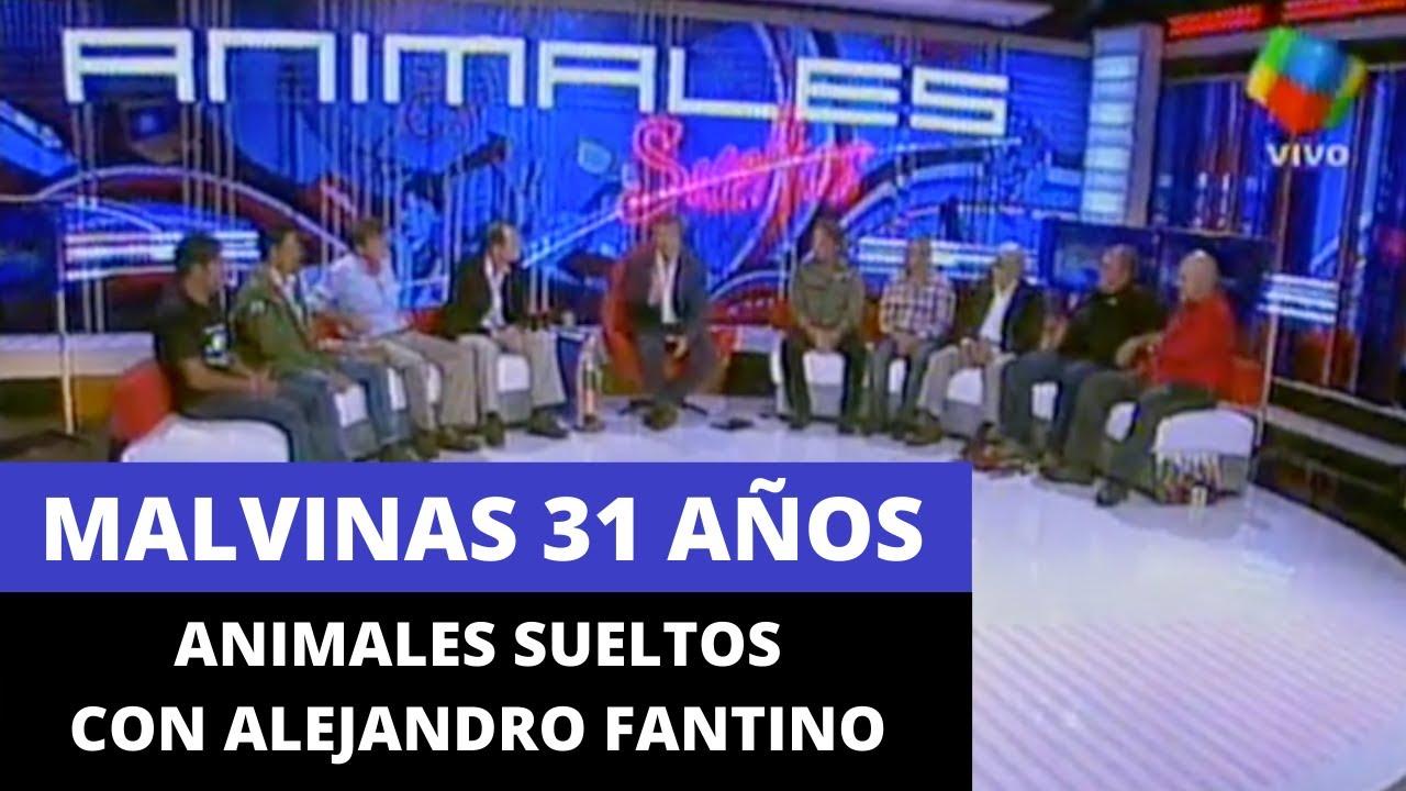 Malvinas 31 Años - Animales Sueltos con Alejandro Fantino