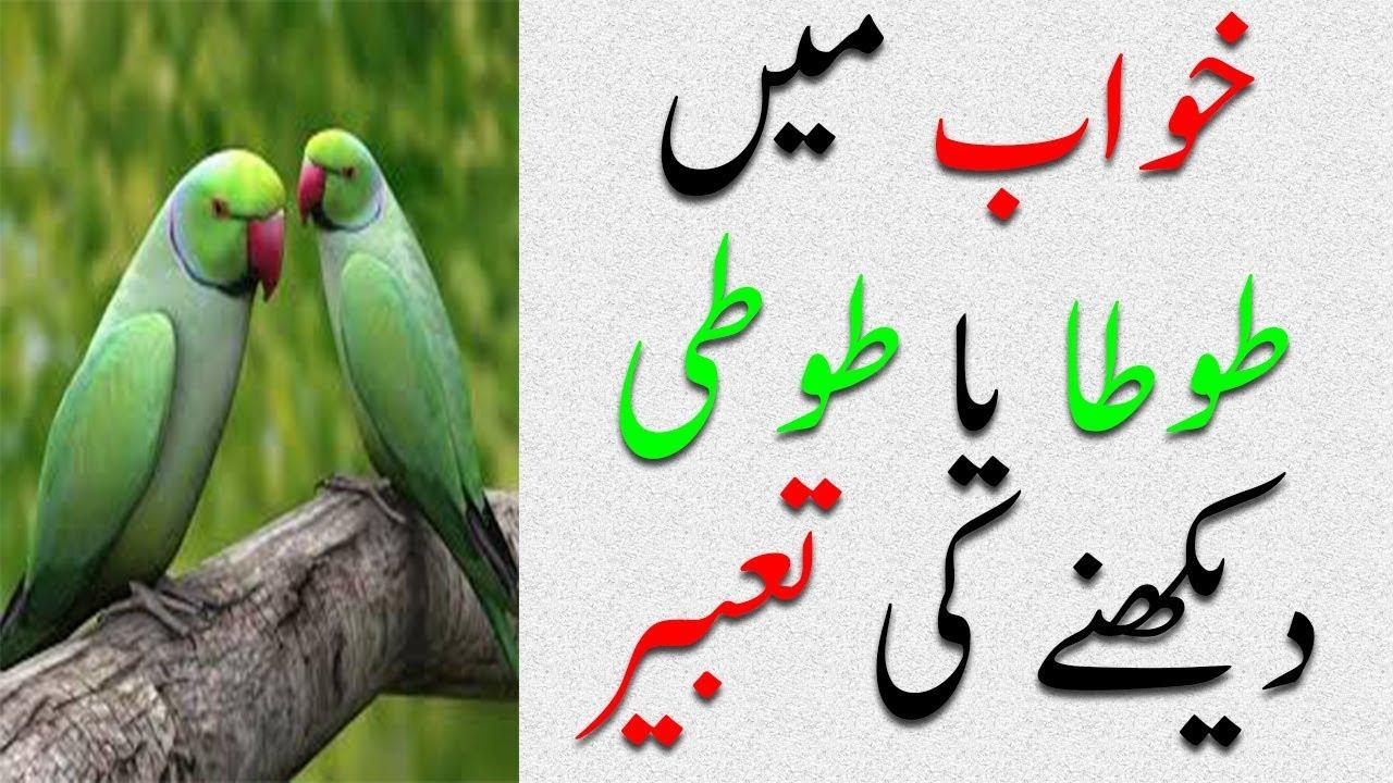 Khawab mein Tota Dekhnay ki Tabeer | Khawab mein Parrot dekhna