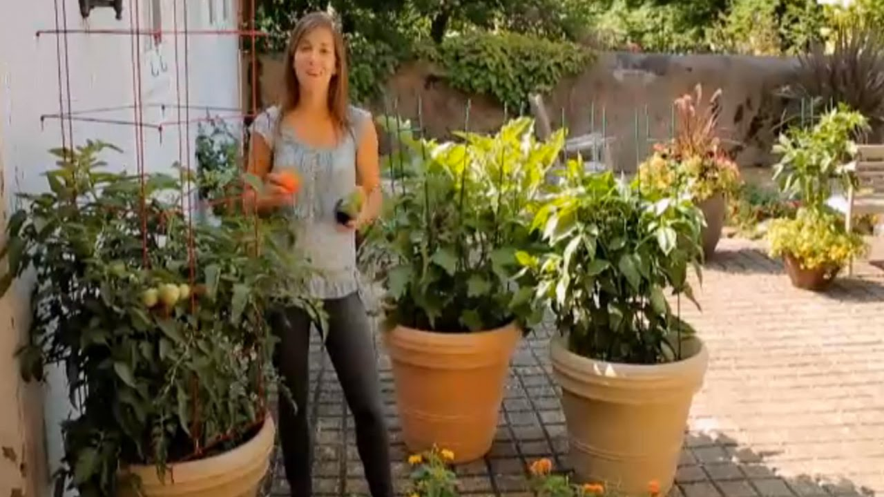 How To Grow Tomatoes Eggplants Amp Peppers In Containers
