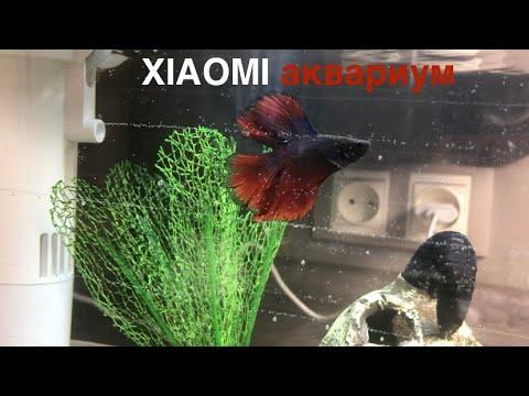 Аквариум Xiaomi. Обзор на маленький аквариум Xiaomi Мини аквариум - Xiaomi акваферма обзор Аквариум