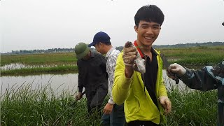 Bắt chuột đồng tại Hà Nội - Field Mouse Hunting in Hanoi HD