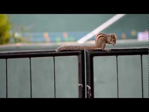 Tiny Sri Lankan Squirrel