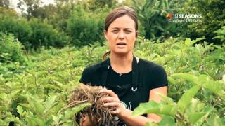 Eggplant gardening tip