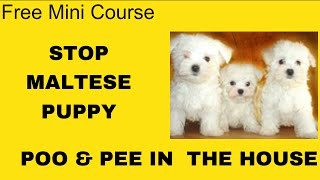 Potty Training Puppy Maltese - Free Course on Potty Training Puppy Maltese