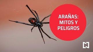 Arañas: Mitos, características y peligrosidad - Al Aire
