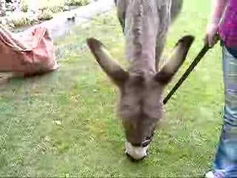 Bonie The Jerusalem Donkey Youtube